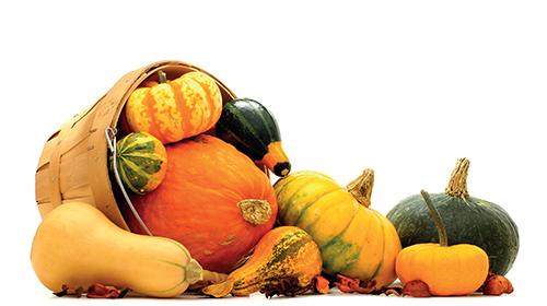 Rozmanitost dýní je mimořádná, vyzkoušejte i méně známé odrůdy, všechny se pěstují podobně.