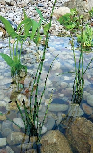 Rostliny vysazené bez substrátu získávají živiny přímo z vody.