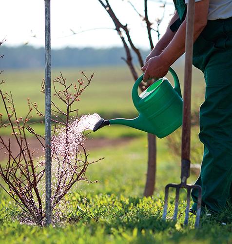 Jaro je vhodné k výsadbě okrasných i užitkových dřevin.