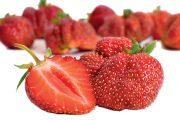 Česká odrůda jahodníku 'Karmen'