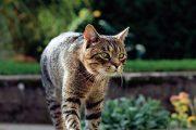 Některé druhy jarních rostlin neodolatelně lákají kočky