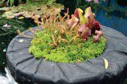 """O geniálních věcech často platí, že jsou velice jednoduché. Týká se to i zahradního vynálezu, který se nazývá """"plovoucí ostrov""""."""