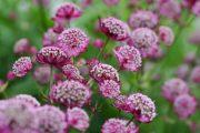 Krásné květy vydrží dlouho i ve váze.