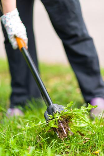 Vypichovač plevelů pomůže spíše při menším výskytu.
