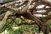 Královská botanická zahrada Peradeniya na ostrově Srí Lanka patří k nejvýznamnějším tropickým zahradám světa a všem milovníkům rostlin vezme dech.