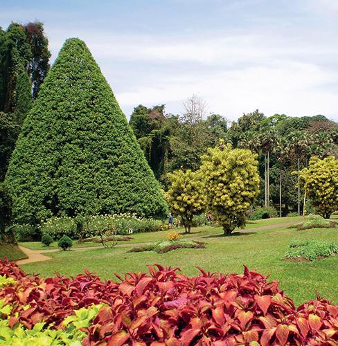 Zahrada Peradeniya je plná kontrastujících tvarů a barev.