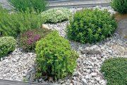 Nenáročné bylinky jsou ideální pro časově vytížené zahrádkáře, kteří nemají času nazbyt.