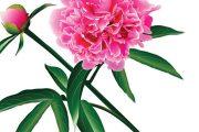 Tyto krásné rostliny učarují skoro každému. Jednotlivé druhy se od sebe ale dost liší.