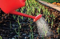 Hrozbou pro nově vysazené rostliny je vítr, který zvyšuje odpar.