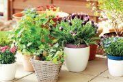 Prodávají se desítky různých druhů, ze kterých vykouzlíte krásné truhlíky, které vás budou těšit po celé léto.