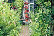 Skleník barevně oživí popínavá růže i květiny umístěné na štaflích, které se o něj opírají.