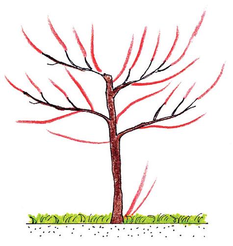 Čtvrtkmen třešně a švestky
