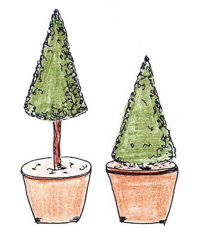 okud s tvarováním dřevin začínáte, vyzkoušejte nejprve jednoduché tvary, jako je koule nebo jehlan.
