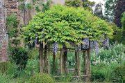 Vistárii (Wisteria) znáte zejména jako popínavou rostlinu.