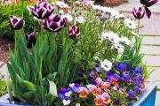 Glazované nádoby skvěle doplní kvetoucí druhy rostlin.