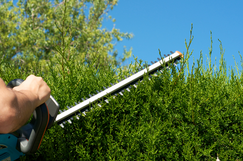 Elektrický nebo motorový plotostřih oceníte především na živé ploty větších rozměrů.