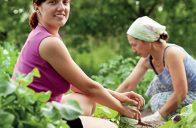 Potraviny z blízkého okolí jsou čerstvé, zdravé a chutné.