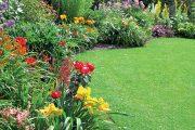 Odhadnout, kdy je opravdu nutné trávník zalít, je otázkou cviku.