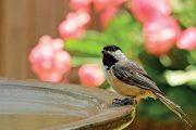 Koupadlo či pítko pro ptáky potěší na zahradě nejen malé opeřence, ale i vaše děti.