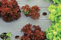 Fólie se používají proti růstu plevelů i jako tepelná izolace půdy.