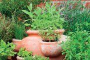 Vlhkomilnější druhy je potřeba v květináči z pálené hlíny častěji zalévat.