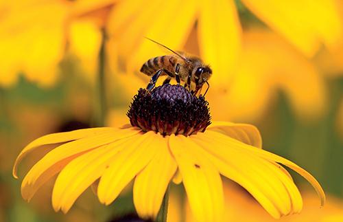 Během letních dnů jsou zahrádkáři ve zvýšené míře vystaveni útokům bodavého hmyzu.