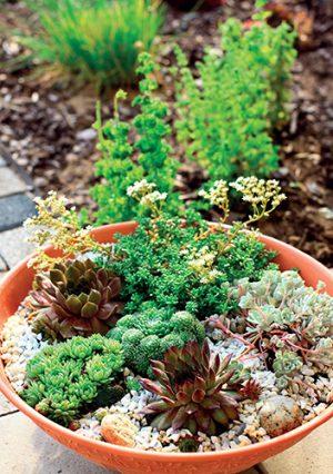 Mělké mísy umožní pěstování odolných skalniček mnoha tvarů.