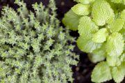 Bylinky dodají příjemnou vůni a léčivé látky.