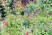Navštívená zahrada doslova překypuje květy a barvami.