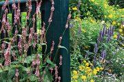 Nástrojem k vytváření zahradních kompozic je pro Heikieho i fotografie.