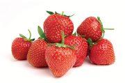 Pěstování jahodníku stáleplodícího typu se nijak neliší od jednou plodících odrůd.
