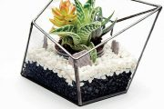 Vytvořte si doma malou zahrádku pomocí terária na květiny od Urban Botanist.