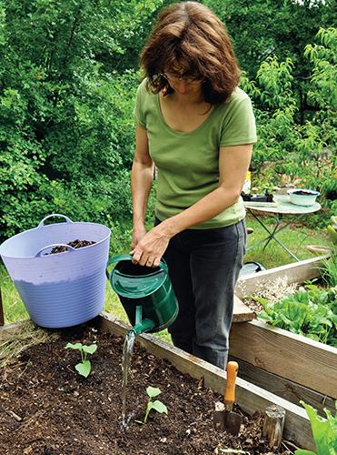 Na českých zahradách se okurky pěstují málo