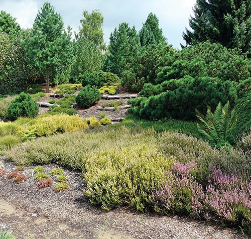 Vřesoviště v Dendrologické zahradě v Průhonicích