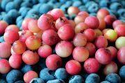 Borůvky náleží k nejoblíbenějším druhům drobného ovoce.