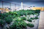 Přírodní část bylinkové zahrady je zamulčována kamennou vápencovou drtí, která hezky vypadá a brání přehřívání substrátu.