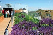 Výraznou úlohu v kompozici bylinkové zahrady hrají šalvěje. Celá zahrada se navíc odráží v zrcadle na stěně budovy, které ji tak opticky zvětšuje.
