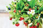 Do kytice zkuste zakomponovat výhony jahodníku i s plody.