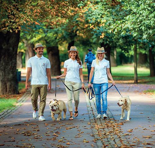Služba Doginni.cz zprostředkovává nejen hlídání a venčení psů, ale i trénink a další doplňkové služby péče o psa.