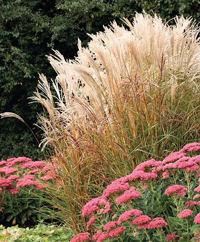 Závlaha zahrady patří mezi často řešené ekologické otázky.