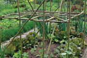 Při pěstování některých druhů tykvovité zeleniny se zahrádkáři často potýkají s tím, že si tato zelenina nárokuje až příliš velký životní prostor.