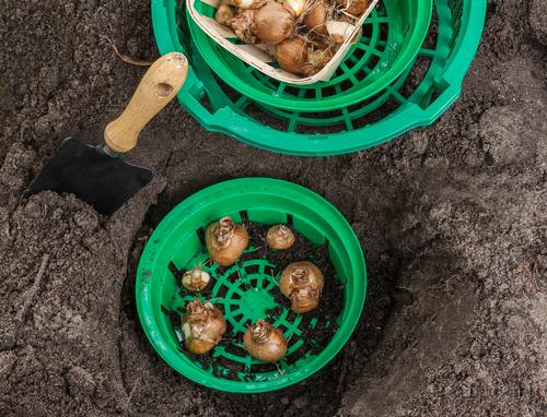 Plastové koše cibule před hlodavci neochrání na 100%.