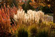 Trávy vytváří nádherný efekt také na podzim a během zimy.