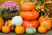 Tykve nás překvapí mnoha odrůdami v zajímavých barvách i tvarech.