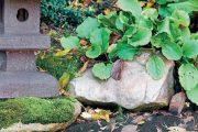 Do okolí jezírka vysaďte odolné tuzemské druhy rostlin, aby vypadalo dobře i mimo hlavní sezonu.