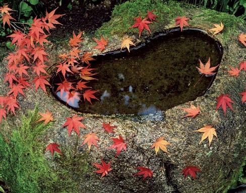 Vodní hladinu chraňte od podzimu speciální sítí před padajícím listím.