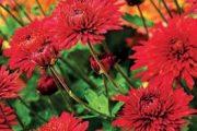 Podzim na člověka dýchne úžasnou atmosférou pestrých barev.