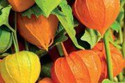 Oranžová barva navozuje dobrou a optimistickou náladu, podporuje dobré vztahy a zabírá proti depresi. I proto ji mají rádi extroverti a společenští lidé.