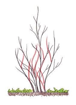 Citlivý řez pro dřeviny, které ho nevyžadují.