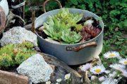 Ani starý nepotřebný hrnec nemusíte hned vyhodit, dobře v něm porostou suchomilné rostliny.